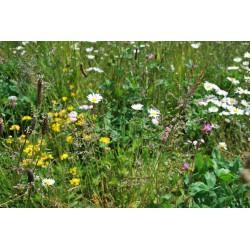 Wildflowermat (per m2)