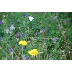 Bees & Butterflies mat (max...